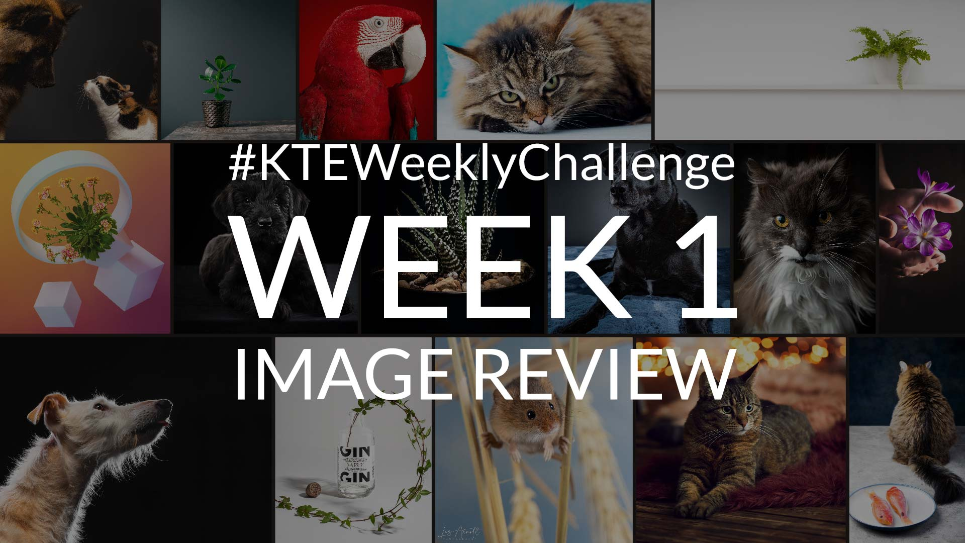 Photography Challenge Image Review – Week 1