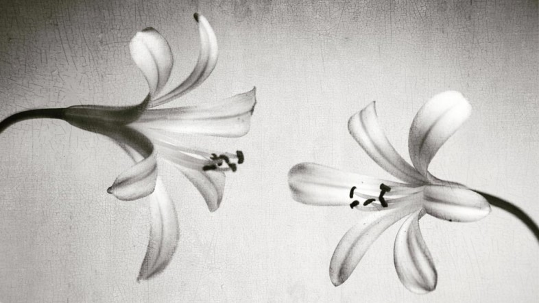 An image of black and white flowers by Alessandra Centanni