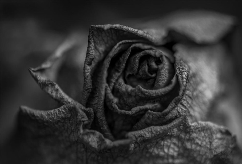 A black and white flower image by Craig Loftus