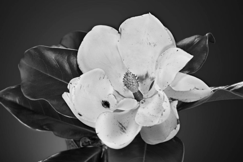 An image of black and white flowers by Doug Howell