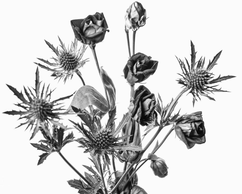 An image of black and white flowers by Gavin Bowyer