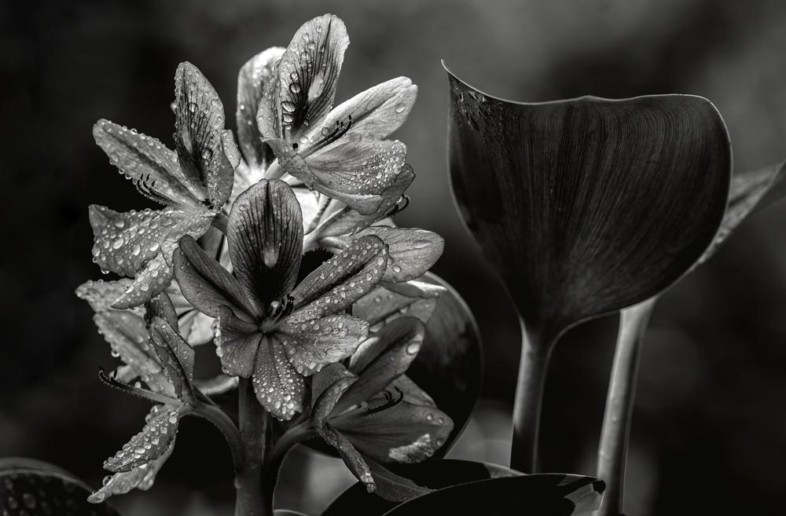 An image of black and white flowers by Hemant Chopra