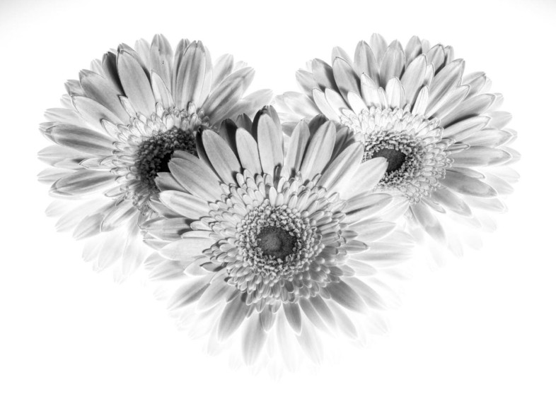 An image of black and white flowers by Ingo Donath