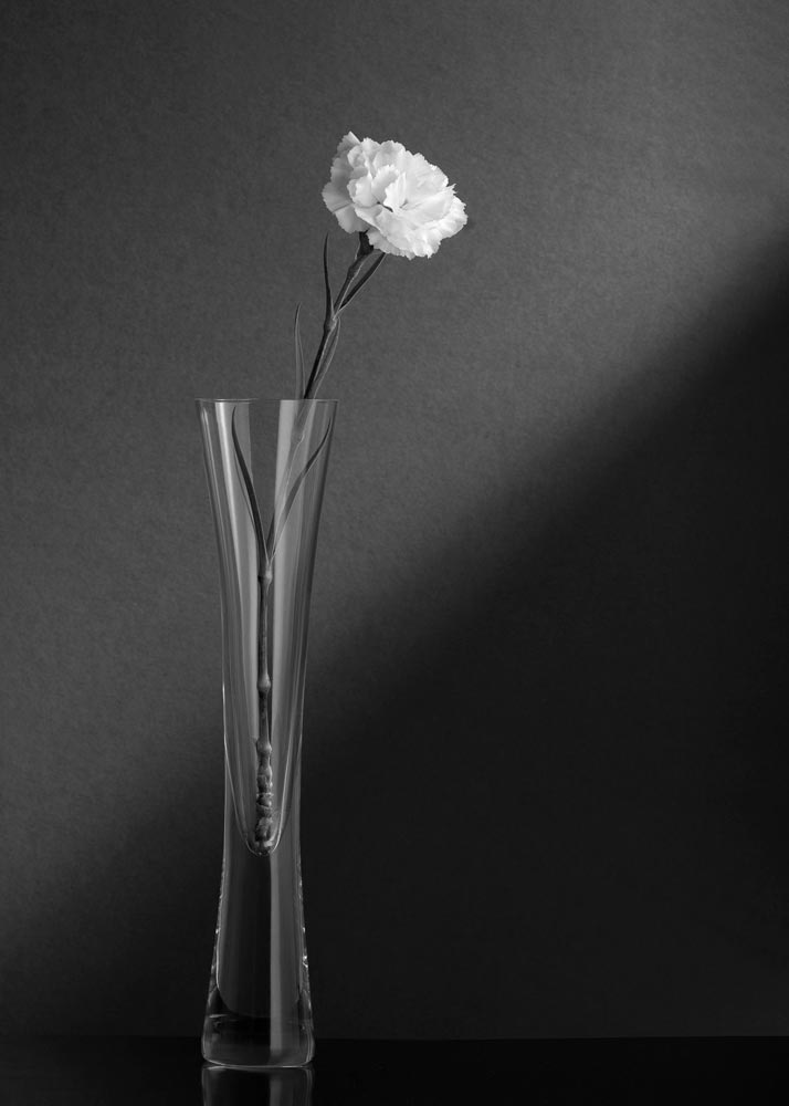 An image of black and white flowers by James Gray
