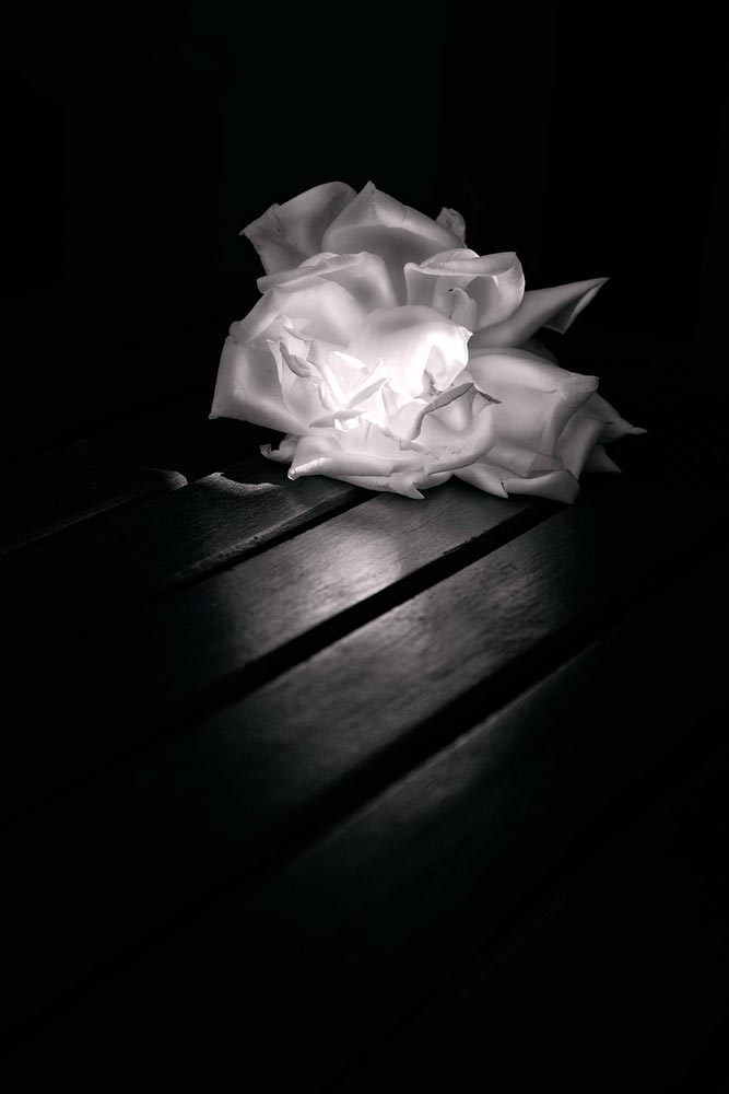An image of black and white flowers by Jorge Reynal