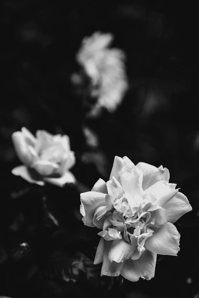 An image of black and white flowers by Julien Borghino