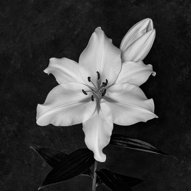 An image of black and white flowers by Mervyn McKeown