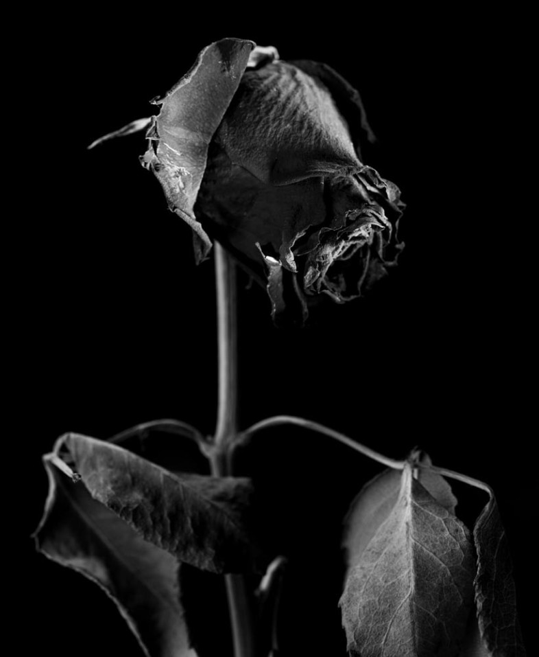 An image of black and white flowers by  Michael Allramseder