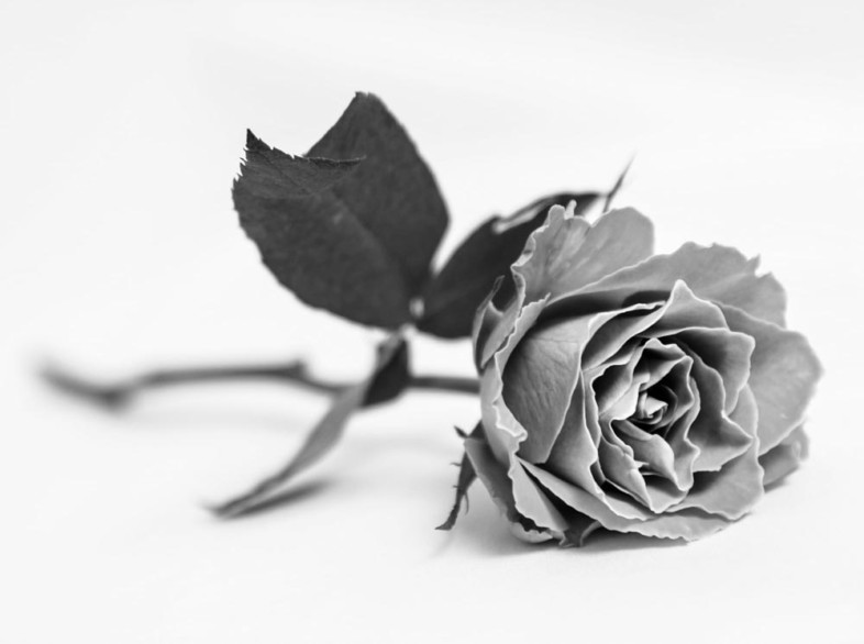 A black and white flower image by Paul Smith
