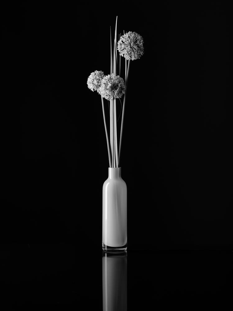 An image of black and white flowers by Paul Sokal