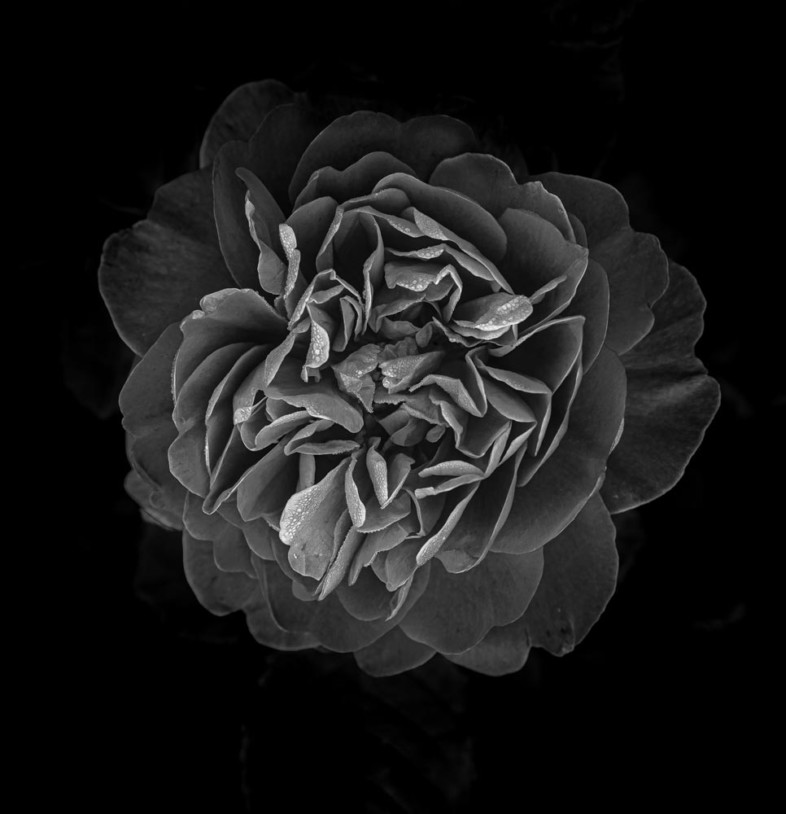 An image of black and white flowers by  Petr Skalka
