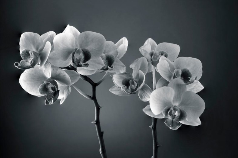 A black and white flower image by Ritsnrazz Photography