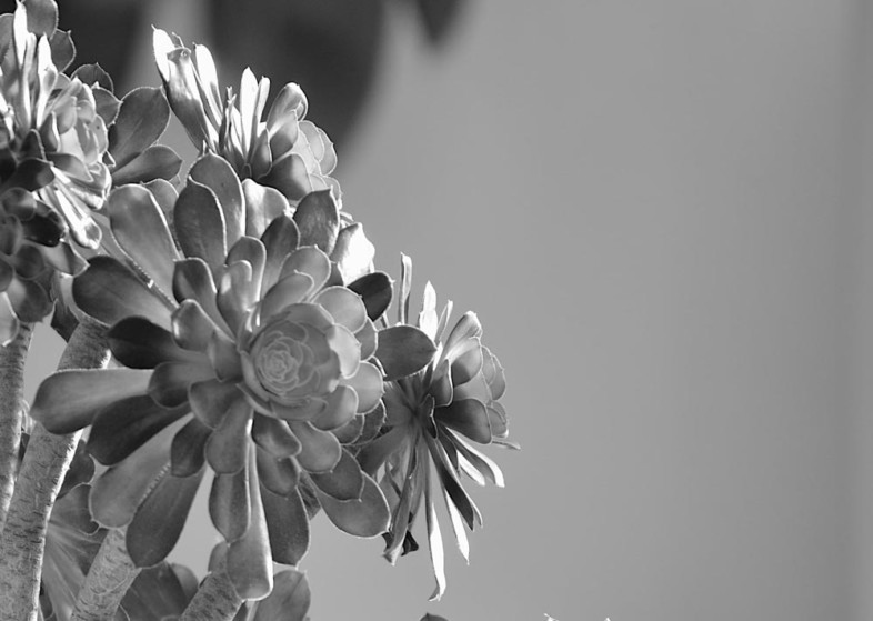A black and white flower image by Robert Ransley