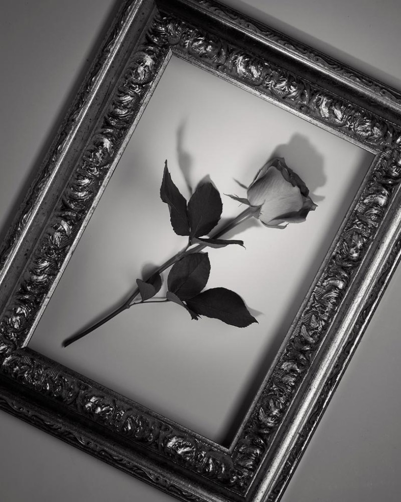 A black and white flower image by Samuel Medrano Muro