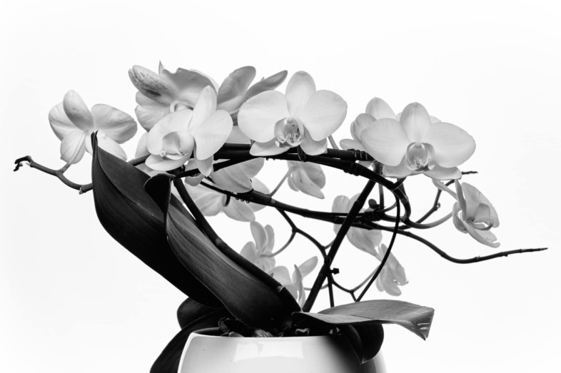 A black and white flower image by Slim Zrelli