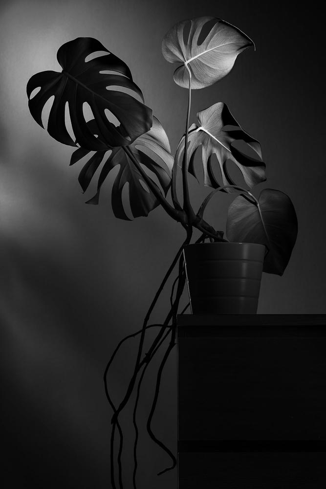 A black and white flower image by Soltesz Theophil