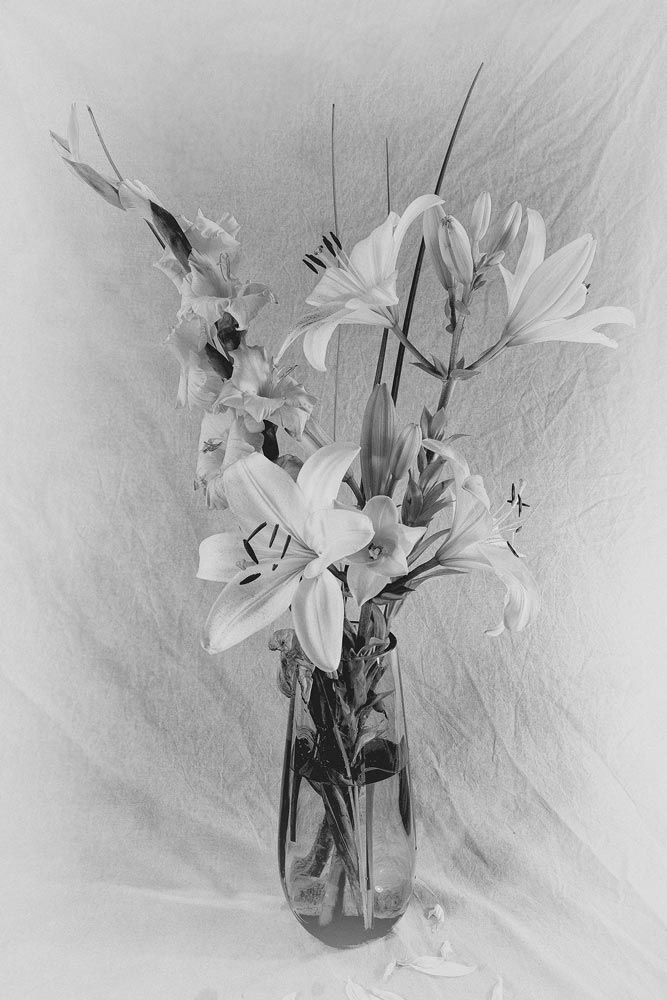 A black and white flower image by Steve Molnar