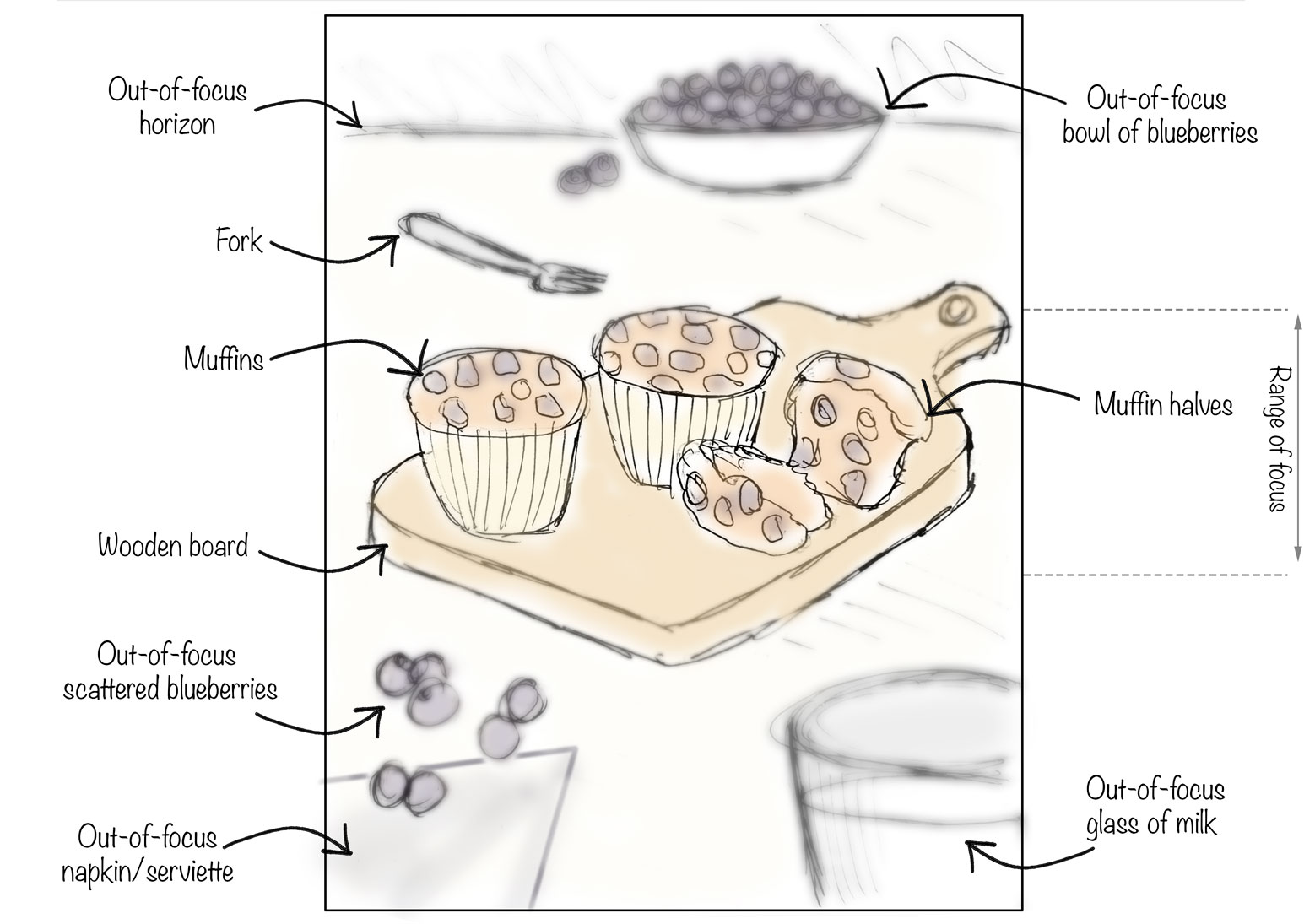 Sketch of muffins for photography brief