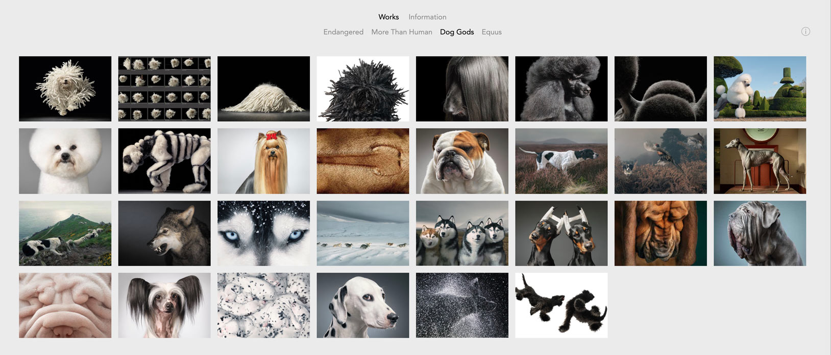 Tim Flach website images