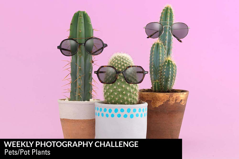 Weekly Photography Challenge - Pot Plants or Pets