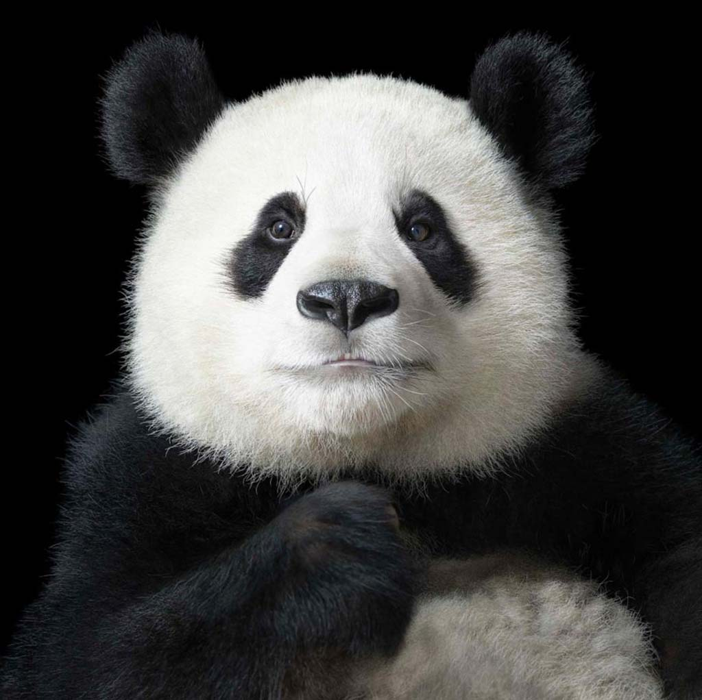 Photography by Tim Flach