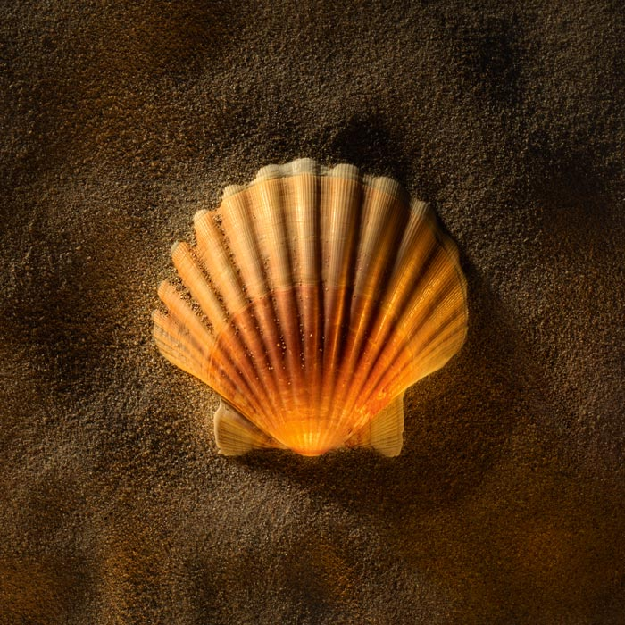 Shell Series: Imitating Golden Hour in the Studio