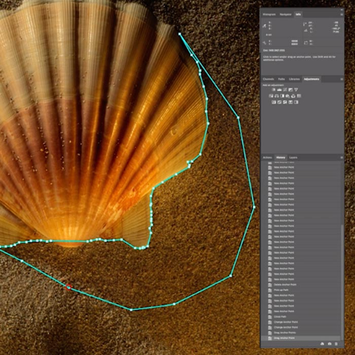 Shell Series: Retouching Still-Life Images to Enhance the Beauty of Nature